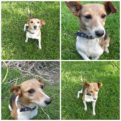 Dolly, egy kutya a sok közül, aki gazdit keres - az egyesület Facebook oldalán rendszeresen bemutat az éppen örökbefogadásra váró állatokat (Fotó: ÁVE)