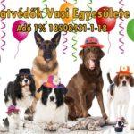 Fotó: Állatvédők Vasi Egyesülete Facebook oldal